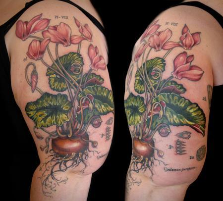 Tattoos - cyclamen flower tattoo vintage botanical - 131944