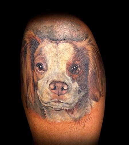 Haylo - Brittany Spaniel Dog Portrait
