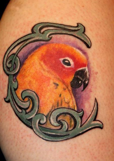 Steve Phipps - Parrot