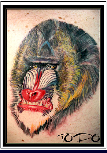 Tattoos - Baboon - 27746