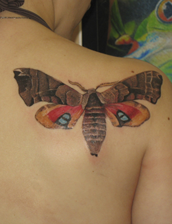 Tattoos - Butterfly. - 21710