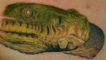 Tattoos - Boa - 20716