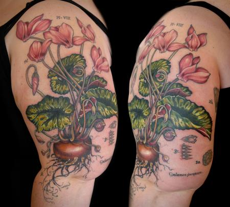 Tattoos - cyclamen flower tattoo vintage botanical - 131944