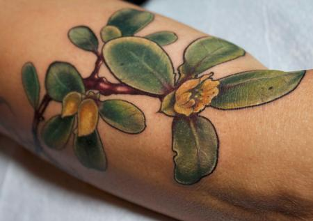 Tattoos - succulent plant tattoo - 131951
