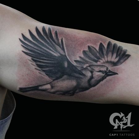 Tattoos - Flying Blue Jay - 122135