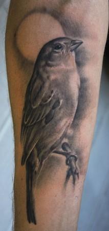 Tattoos -  - 40103