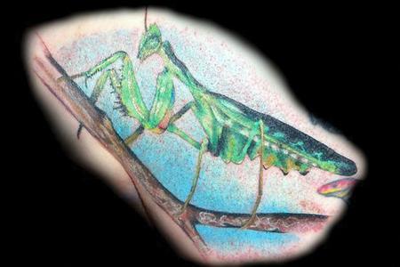 Diego - Praying Mantis