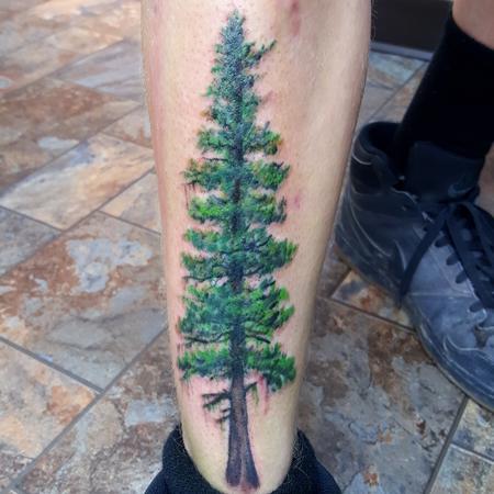 Tattoos - Realistic Evergreen tree on shin - 119018