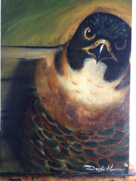 Donny Newman - Falcon