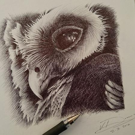 Vanessa Rodriguez - Owl