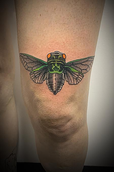 Tattoos - Cicada  - 139376