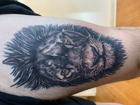 Tattoos - Scarred lion - 142299