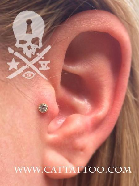 Brittany - Tragus/BVLA