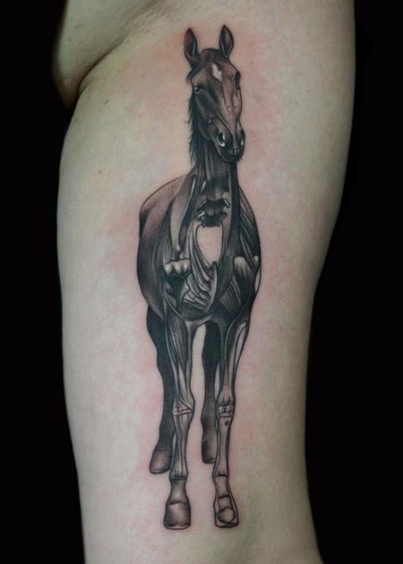 Tattoos - anatomical horse - 58422
