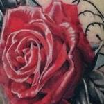 Prints-For-Sale - Progress on Snake and Roses Half Sleeve - 142748