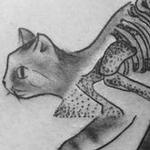 Prints-For-Sale - Skeletal Cat - 126756