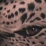 Prints-For-Sale - Jaguar - 132753