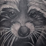 Prints-For-Sale - Racoon - 133719