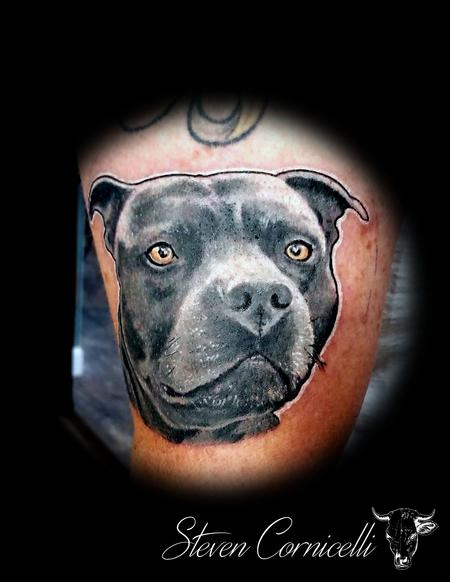 Steve Cornicelli - pitbulls everywhere