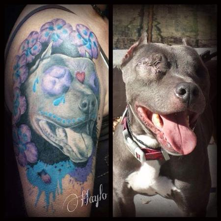 Haylo - Odin, the pit bull with our eyes by Haylo