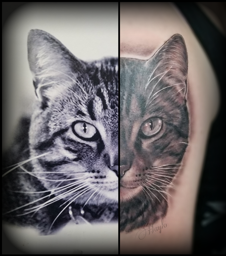 Tattoos - Black and Gray Cat portrait tattoo by Haylo - 141593
