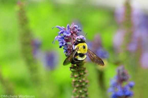 Michele Wortman - Bumble bee in Hyperspacegardens